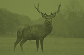 animals_redeer_green